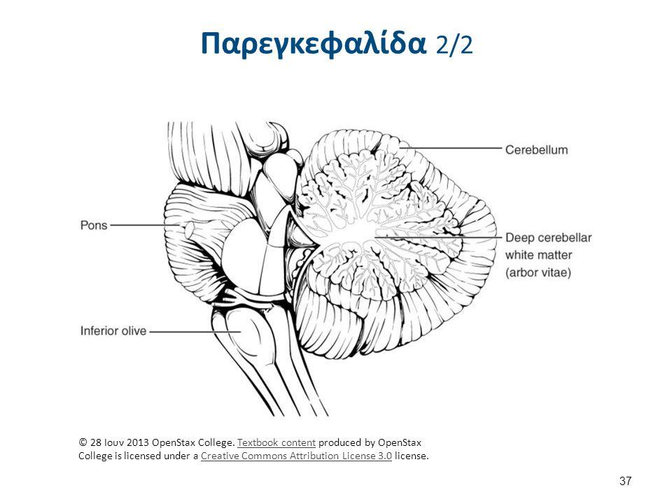 Παρεγκεφαλίδα 2/2 37 © 28 Ιουν 2013 OpenStax College.