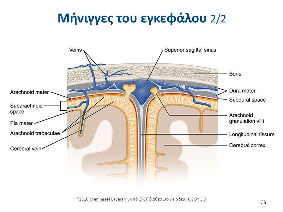 Μήνιγγες του εγκεφάλου 2/2 39 1316 Meningeal LayersN , από CFCF διαθέσιμο με άδεια CC BY 3.01316 Meningeal LayersNCFCFCC BY 3.0