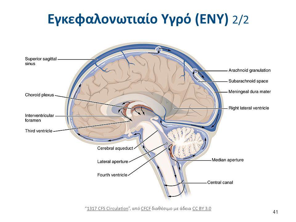 """Εγκεφαλονωτιαίο Υγρό (ΕΝΥ) 2/2 41 """"1317 CFS Circulation"""", από CFCF διαθέσιμο με άδεια CC BY 3.01317 CFS CirculationCFCFCC BY 3.0"""