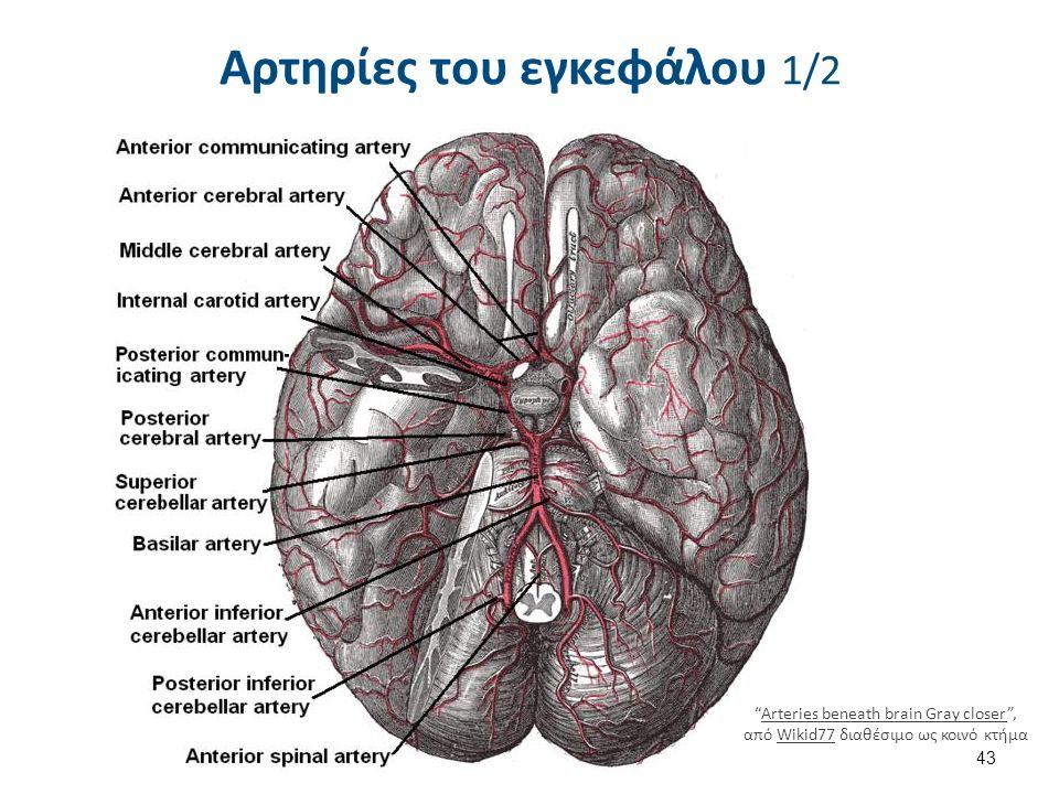 """Αρτηρίες του εγκεφάλου 1/2 43 """"Arteries beneath brain Gray closer"""", από Wikid77 διαθέσιμο ως κοινό κτήμαArteries beneath brain Gray closerWikid77"""