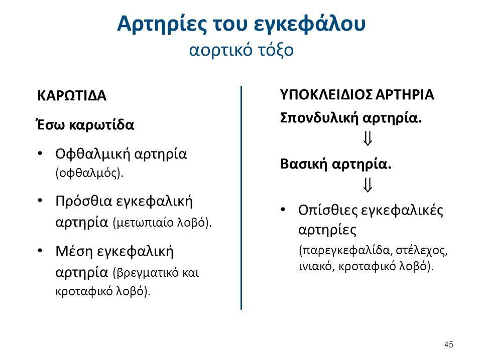 ΚΑΡΩΤΙΔΑ Έσω καρωτίδα Οφθαλμική αρτηρία (οφθαλμός). Πρόσθια εγκεφαλική αρτηρία (μετωπιαίο λοβό). Μέση εγκεφαλική αρτηρία (βρεγματικό και κροταφικό λοβ