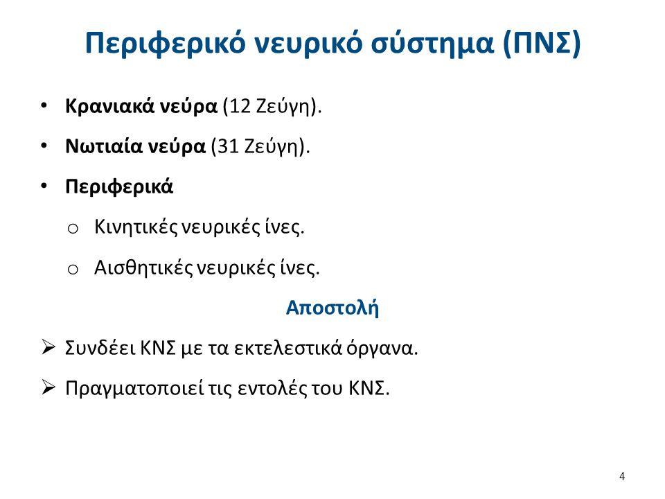 Περιφερικό νευρικό σύστημα (ΠΝΣ) Κρανιακά νεύρα (12 Ζεύγη). Νωτιαία νεύρα (31 Ζεύγη). Περιφερικά o Κινητικές νευρικές ίνες. o Αισθητικές νευρικές ίνες
