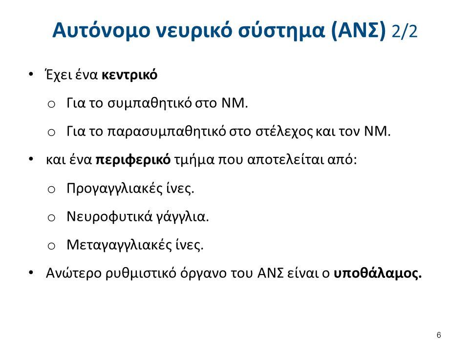 Αυτόνομο νευρικό σύστημα (ΑΝΣ) 2/2 Έχει ένα κεντρικό o Για το συμπαθητικό στο ΝΜ. o Για το παρασυμπαθητικό στο στέλεχος και τον ΝΜ. και ένα περιφερικό