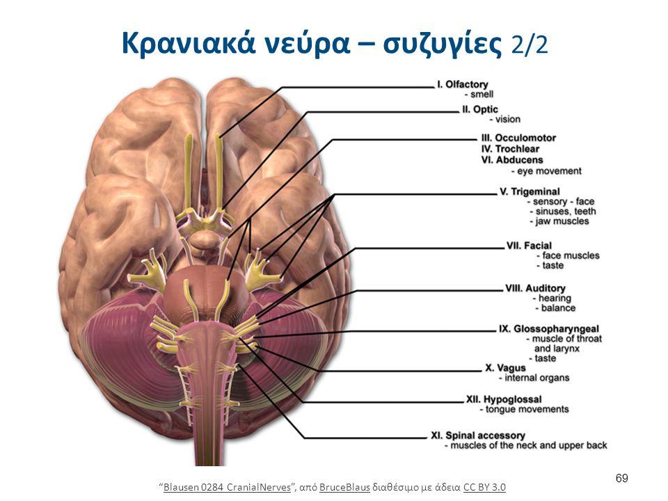 69 Blausen 0284 CranialNerves , από BruceBlaus διαθέσιμο με άδεια CC BY 3.0Blausen 0284 CranialNervesBruceBlausCC BY 3.0 Κρανιακά νεύρα – συζυγίες 2/2