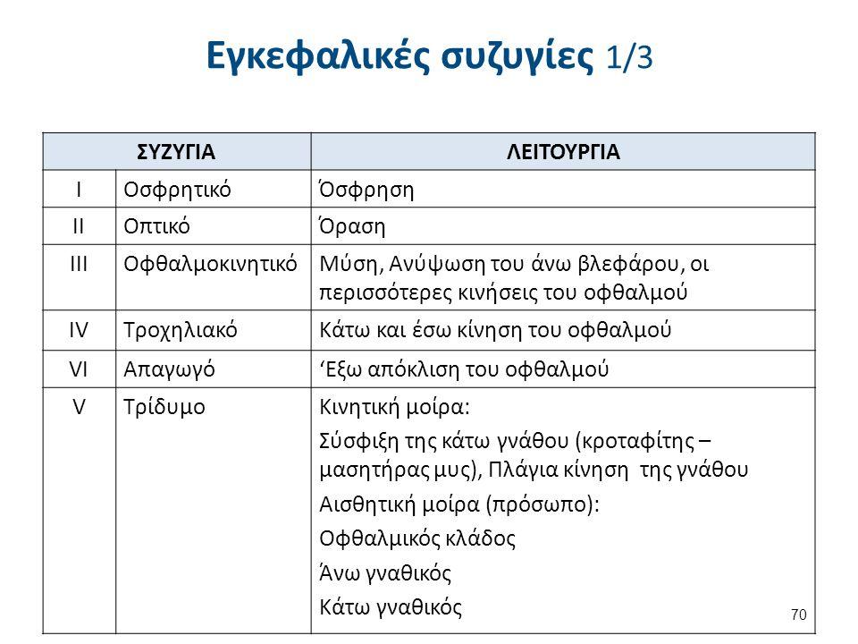 ΣΥΖΥΓΙΑΛΕΙΤΟΥΡΓΙΑ IΟσφρητικόΌσφρηση IIΟπτικόΌραση IIIΟφθαλμοκινητικόΜύση, Ανύψωση του άνω βλεφάρου, οι περισσότερες κινήσεις του οφθαλμού IVΤροχηλιακόΚάτω και έσω κίνηση του οφθαλμού VΙVΙΑπαγωγό'Εξω απόκλιση του οφθαλμού VΤρίδυμοΚινητική μοίρα: Σύσφιξη της κάτω γνάθου (κροταφίτης – μασητήρας μυς), Πλάγια κίνηση της γνάθου Αισθητική μοίρα (πρόσωπο): Οφθαλμικός κλάδος Άνω γναθικός Κάτω γναθικός 70 Εγκεφαλικές συζυγίες 1/3
