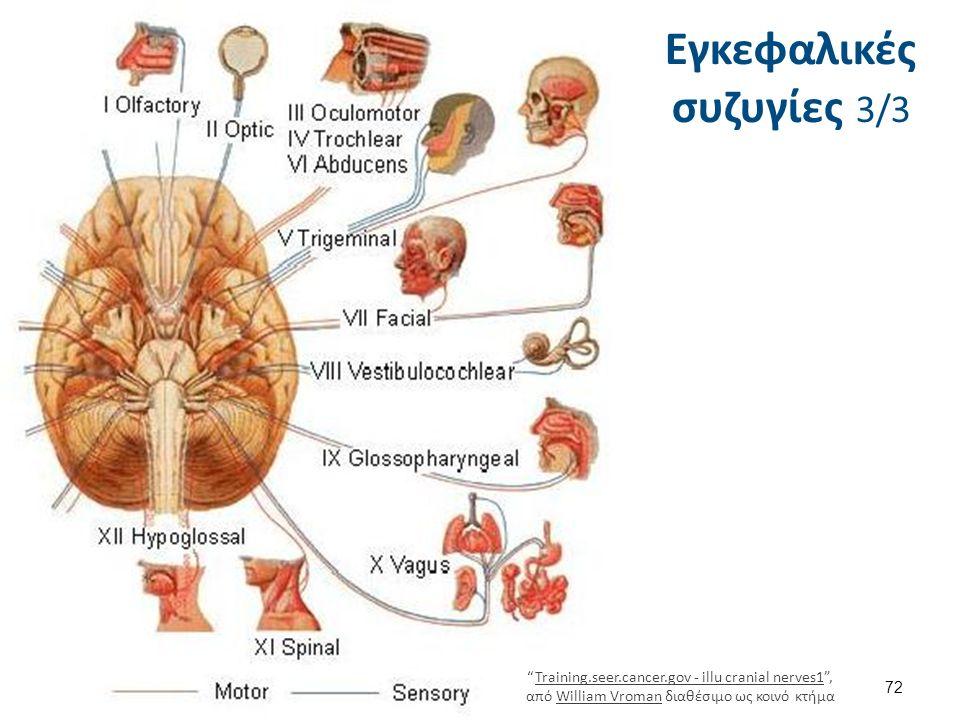 72 Εγκεφαλικές συζυγίες 3/3 Training.seer.cancer.gov - illu cranial nerves1 , από William Vroman διαθέσιμο ως κοινό κτήμαTraining.seer.cancer.gov - illu cranial nerves1William Vroman