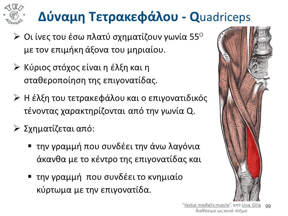Δύναμη Τετρακεφάλου - Q uadriceps  Οι ίνες του έσω πλατύ σχηματίζουν γωνία 55 Ο με τον επιμήκη άξονα του μηριαίου.