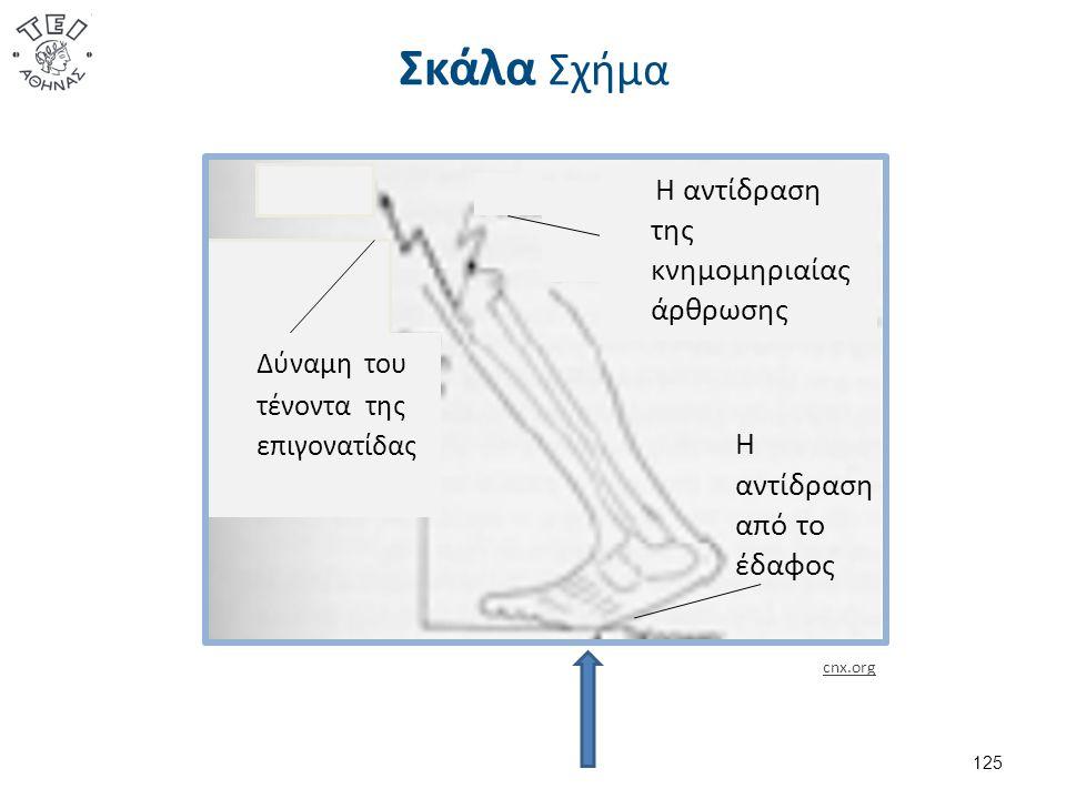 Σκάλα Σχήμα 125 Η αντίδραση από το έδαφος Η αντίδραση της κνημομηριαίας άρθρωσης Δύναμη του τένοντα της επιγονατίδας cnx.org