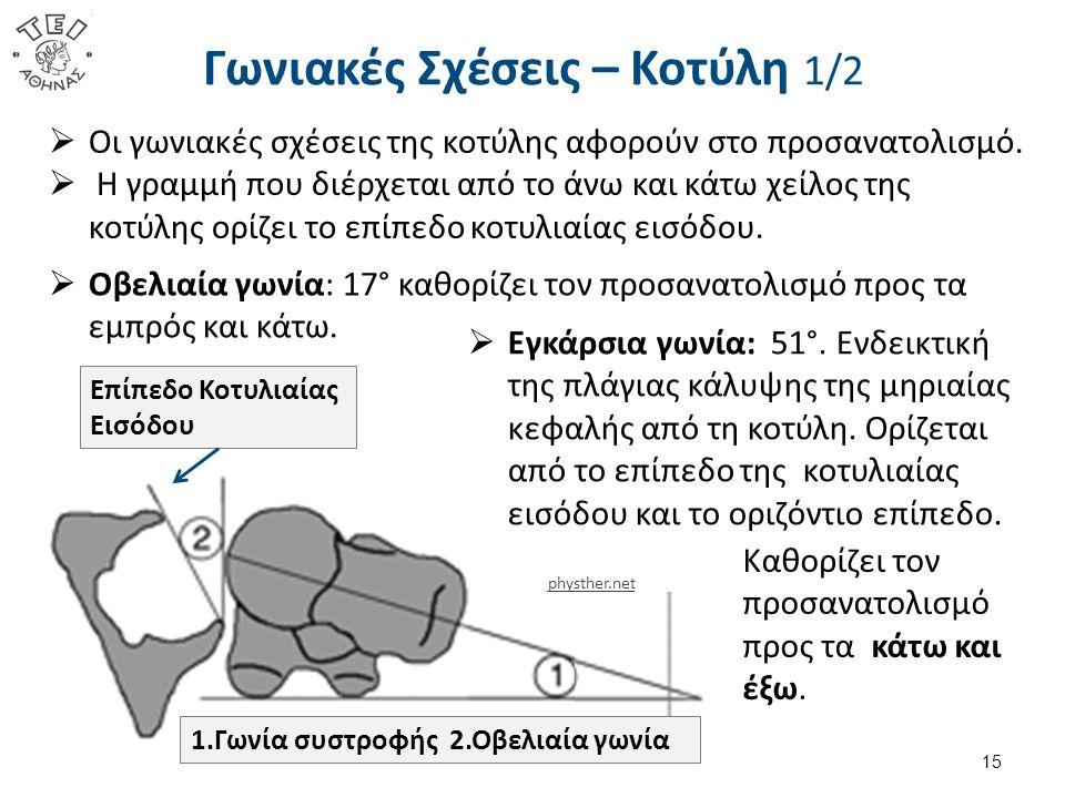 Γωνιακές Σχέσεις – Κοτύλη 1/2 15  Οι γωνιακές σχέσεις της κοτύλης αφορούν στο προσανατολισμό.