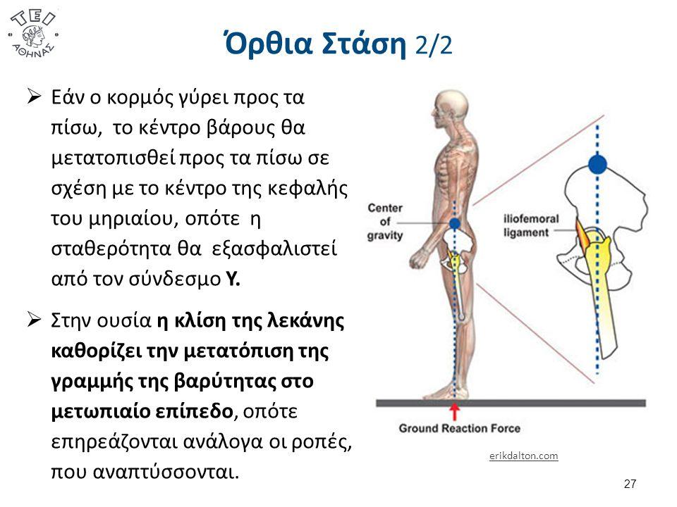 Όρθια Στάση 2/2 27  Εάν ο κορμός γύρει προς τα πίσω, το κέντρο βάρους θα μετατοπισθεί προς τα πίσω σε σχέση με το κέντρο της κεφαλής του μηριαίου, οπότε η σταθερότητα θα εξασφαλιστεί από τον σύνδεσμο Υ.