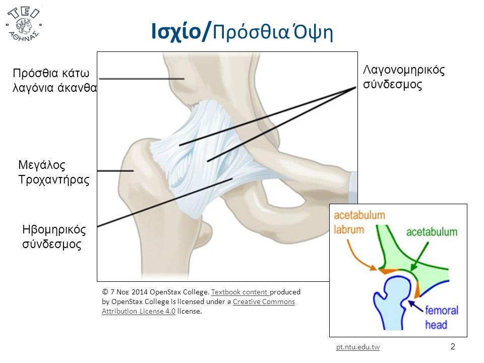 Πλάγιοι Σύνδεσμοι Εξωγενείς  Οι πλάγιοι σύνδεσμοι του γόνατος εξασφαλίζουν σταθερότητα στην έκταση (διατείνονται) και στις 30 μοίρες κάμψης σε συνεργασία με τον αρθρικό θύλακα και τις άλλες συνδεσμικές κατασκευές.