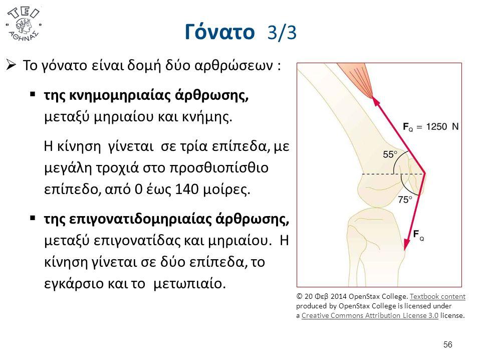 Γόνατο 3/3  Το γόνατο είναι δομή δύο αρθρώσεων :  της κνημομηριαίας άρθρωσης, μεταξύ μηριαίου και κνήμης.