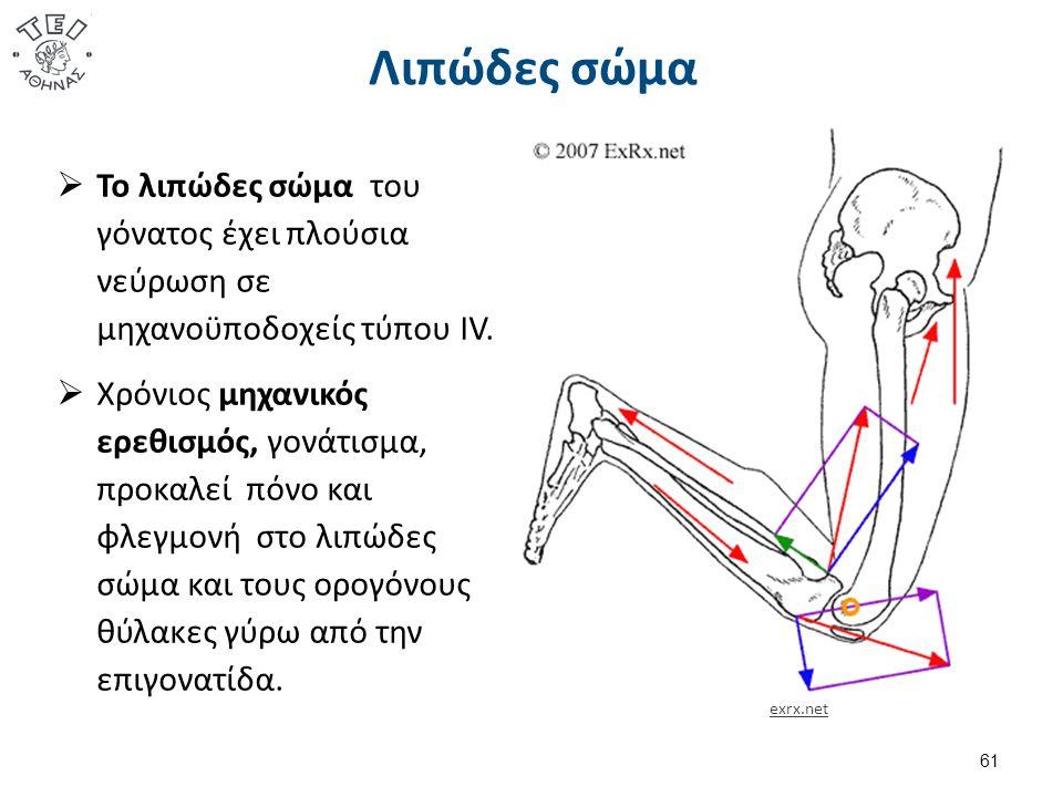Λιπώδες σώμα  Το λιπώδες σώμα του γόνατος έχει πλούσια νεύρωση σε μηχανοϋποδοχείς τύπου IV.