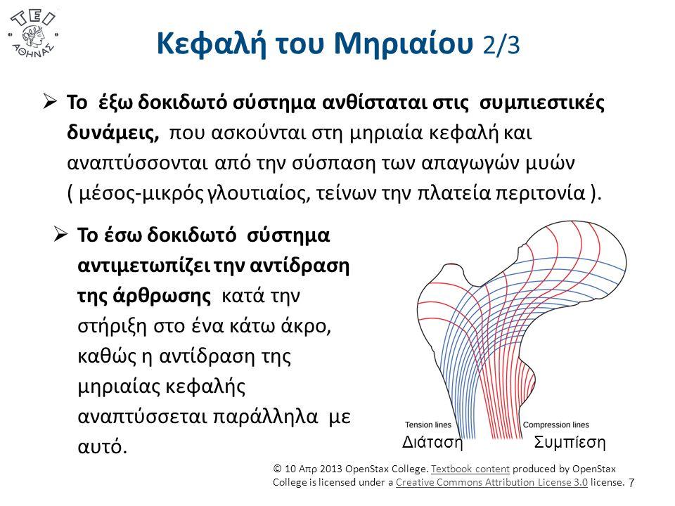 Κεφαλή του Μηριαίου 3/3 8 Οι επιφυσιακές πλάκες έχουν σχέση ορθής γωνίας με το έσω δοκιδωτό σύστημα, άρα είναι κάθετες με την δύναμη της αντίδρασης της άρθρωσης.