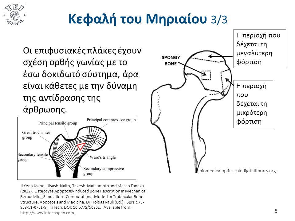 Δομικά στοιχεία 2/3  Οι μηνίσκοι συμμετέχουν στην διαχείριση της δύναμης της αντίδρασης της άρθρωσης.