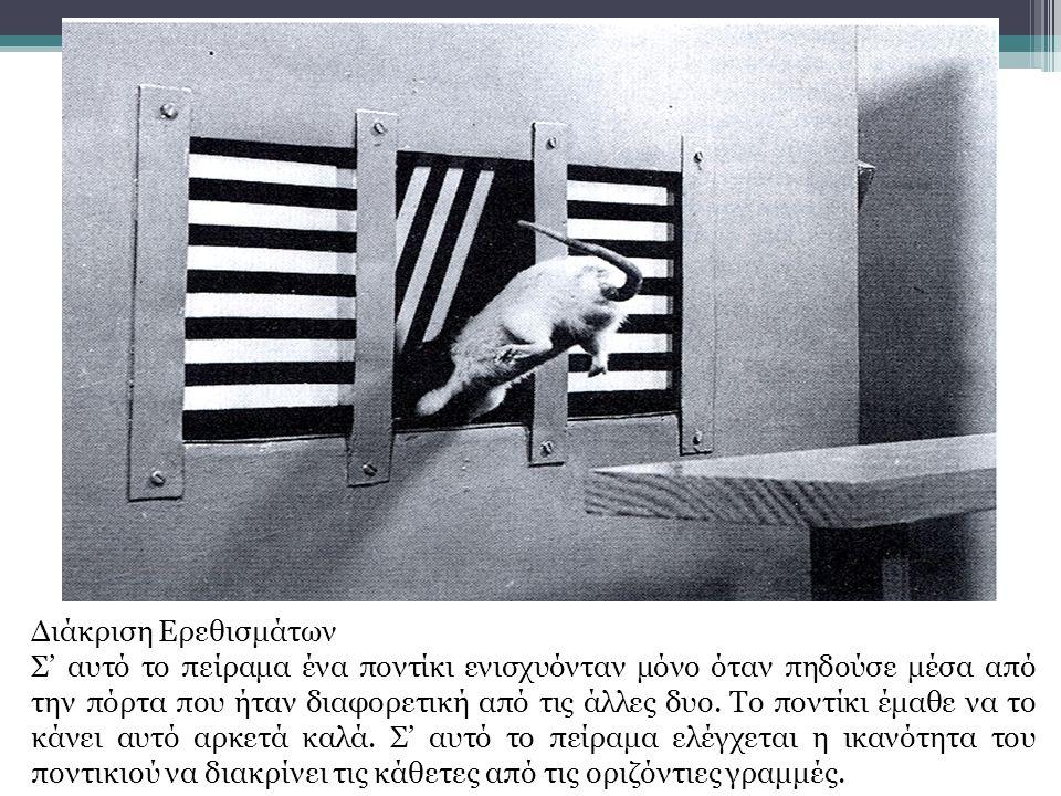 Διάκριση Ερεθισμάτων Σ' αυτό το πείραμα ένα ποντίκι ενισχυόνταν μόνο όταν πηδούσε μέσα από την πόρτα που ήταν διαφορετική από τις άλλες δυο.