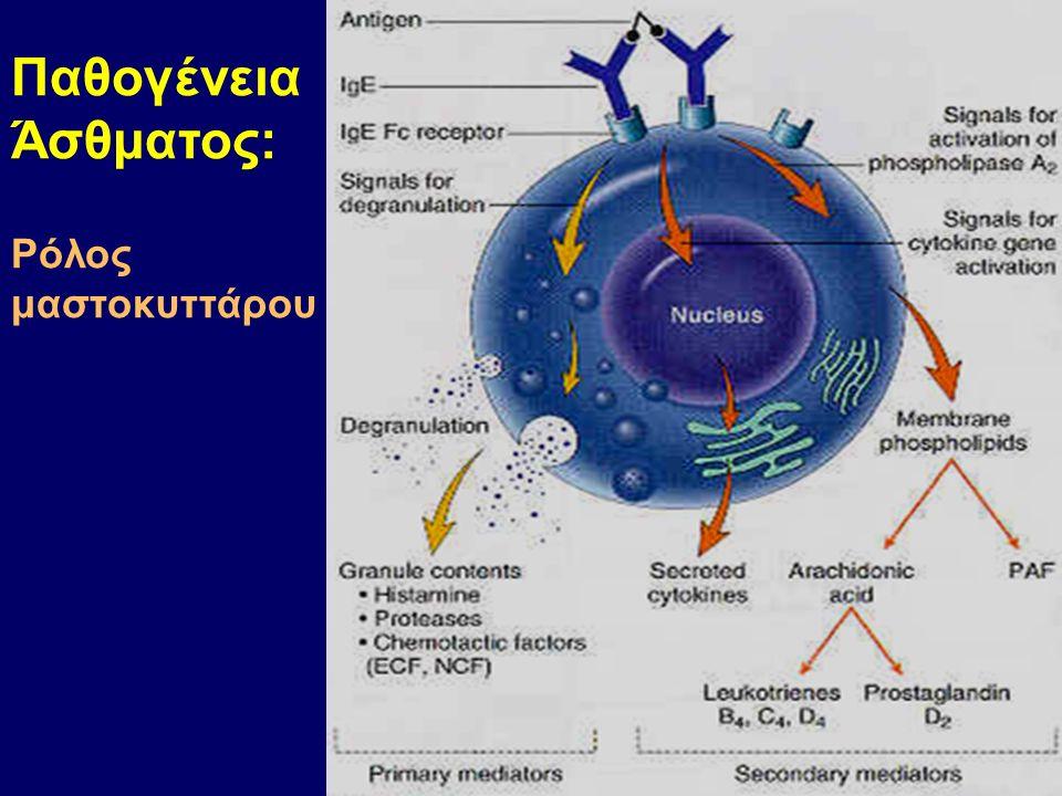 Παθογένεια Άσθματος: Ρόλος μαστοκυττάρου