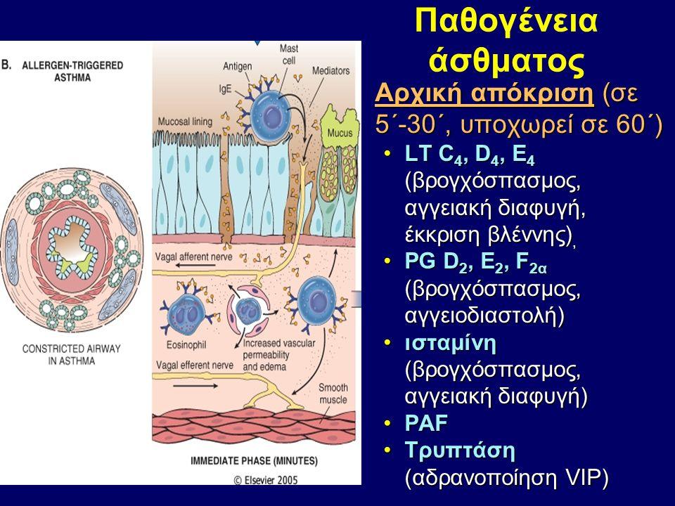 Παθογένεια άσθματος Αρχική απόκριση (σε 5΄-30΄, υποχωρεί σε 60΄)Αρχική απόκριση (σε 5΄-30΄, υποχωρεί σε 60΄) LT C 4, D 4, E 4 (βρογχόσπασμος, αγγειακή διαφυγή, έκκριση βλέννης),LT C 4, D 4, E 4 (βρογχόσπασμος, αγγειακή διαφυγή, έκκριση βλέννης), PG D 2, E 2, F 2α (βρογχόσπασμος, αγγειοδιαστολή)PG D 2, E 2, F 2α (βρογχόσπασμος, αγγειοδιαστολή) ισταμίνη (βρογχόσπασμος, αγγειακή διαφυγή)ισταμίνη (βρογχόσπασμος, αγγειακή διαφυγή) PAFPAF Τρυπτάση (αδρανοποίηση VIP)Τρυπτάση (αδρανοποίηση VIP)