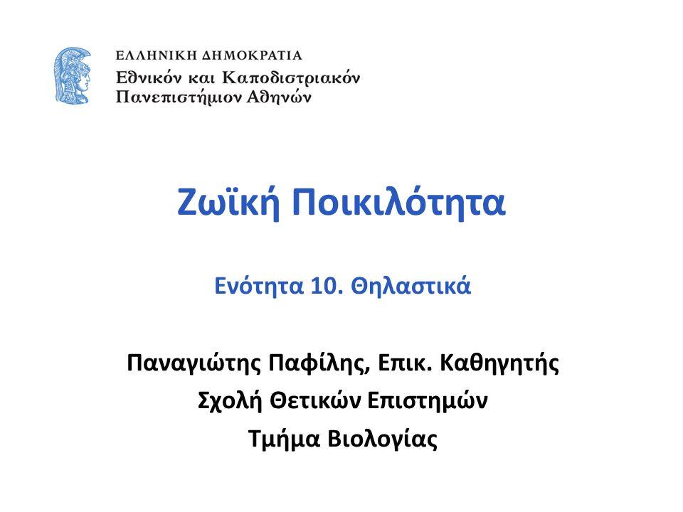 Σημείωμα Αναφοράς Copyright Εθνικόν και Καποδιστριακόν Πανεπιστήμιον Αθηνών, Παναγιώτης Παφίλης, Επίκουρος Καθηγητής.