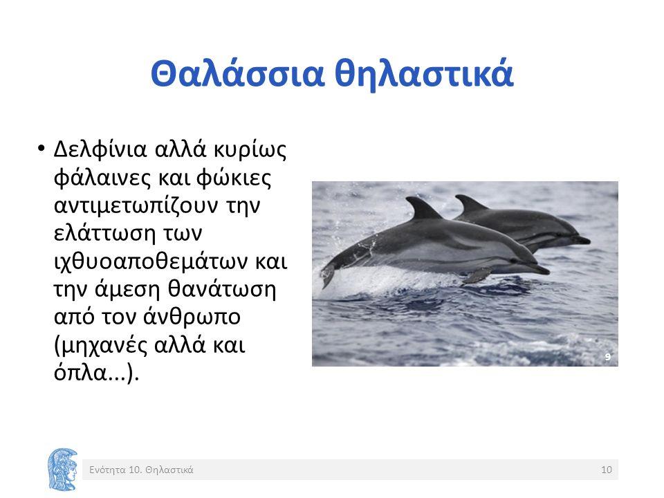 Θαλάσσια θηλαστικά Δελφίνια αλλά κυρίως φάλαινες και φώκιες αντιμετωπίζουν την ελάττωση των ιχθυοαποθεμάτων και την άμεση θανάτωση από τον άνθρωπο (μηχανές αλλά και όπλα...).