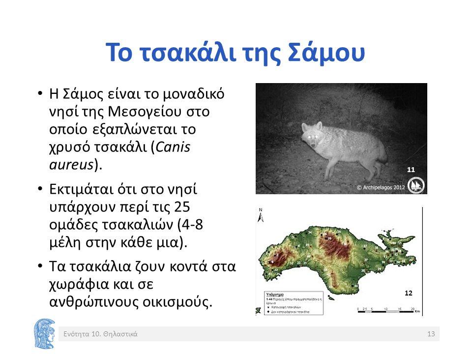 Το τσακάλι της Σάμου Η Σάμος είναι το μοναδικό νησί της Μεσογείου στο οποίο εξαπλώνεται το χρυσό τσακάλι (Canis aureus). Εκτιμάται ότι στο νησί υπάρχο
