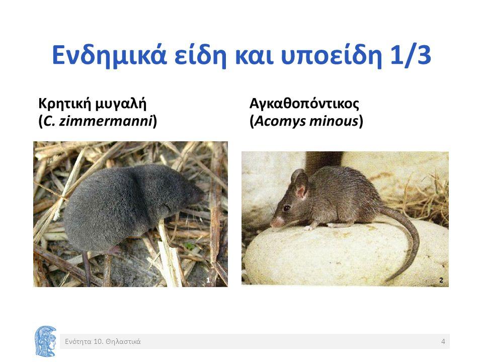 Ενδημικά είδη και υποείδη 1/3 Κρητική μυγαλή (C. zimmermanni) Αγκαθοπόντικος (Acomys minous) Ενότητα 10. Θηλαστικά4 1 2