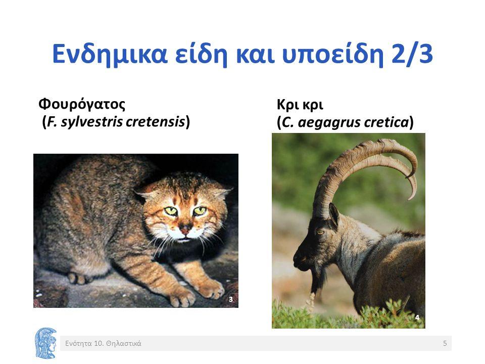 Ενδημικα είδη και υποείδη 2/3 Φουρόγατος (F. sylvestris cretensis) Κρι κρι (C. aegagrus cretica) Ενότητα 10. Θηλαστικά5 3 4