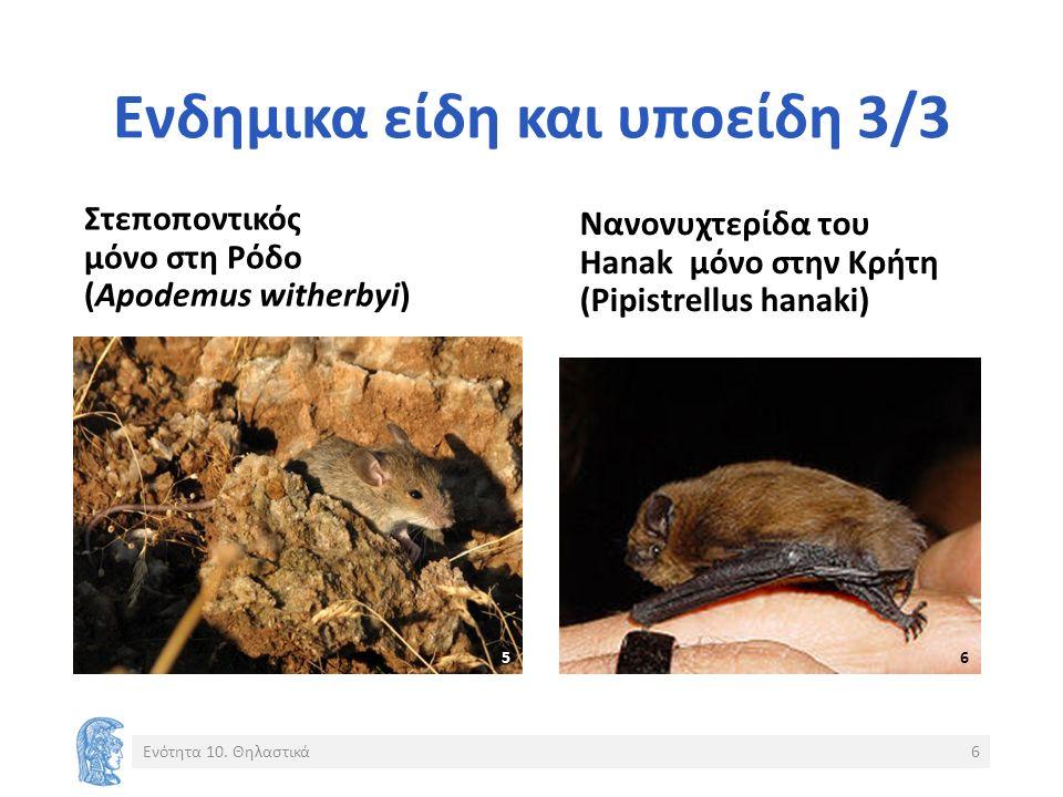 Ενδημικα είδη και υποείδη 3/3 Στεποποντικός μόνο στη Ρόδο (Apodemus witherbyi) Νανονυχτερίδα του Hanak μόνο στην Κρήτη (Pipistrellus hanaki) Ενότητα 1