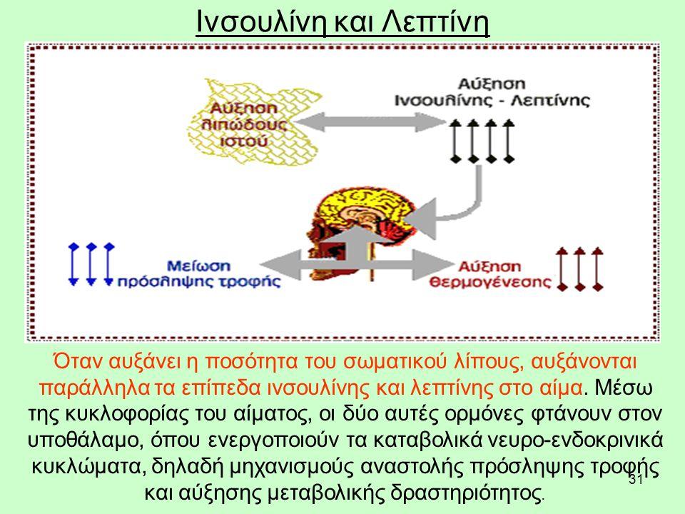 32 Ινσουλίνη και Λεπτίνη Τhe interaction between insulin and leptin.