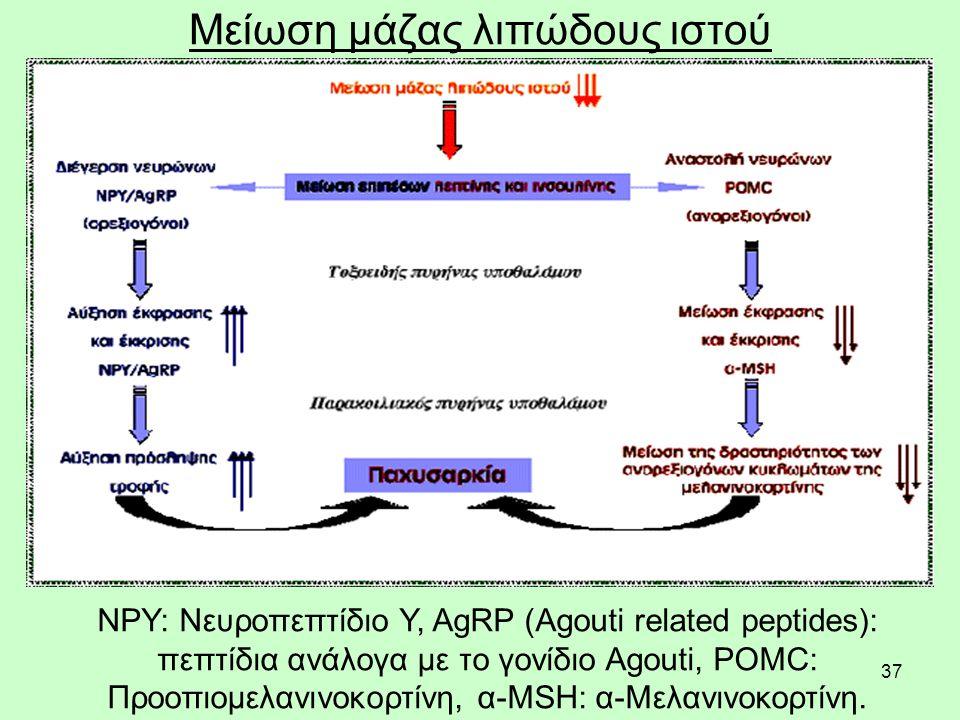37 Μείωση μάζας λιπώδους ιστού NPY: Nευροπεπτίδιο Y, AgRP (Agouti related peptides): πεπτίδια ανάλογα με το γονίδιο Agouti, POMC: Προοπιομελανινοκορτί