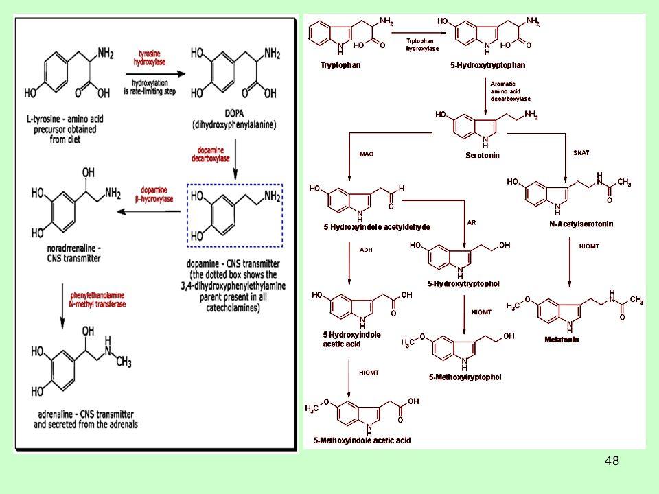 49 Σεροτονίνη, διάθεση, πείνα Η σεροτονίνη (στο κεντρικό νευρικό σύστημα) ελέγχει τη διάθεση μας.