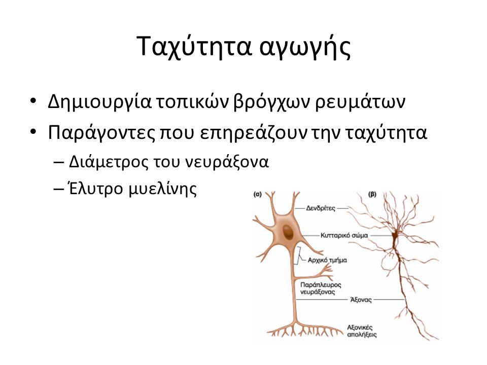 Ταχύτητα αγωγής Δημιουργία τοπικών βρόγχων ρευμάτων Παράγοντες που επηρεάζουν την ταχύτητα – Διάμετρος του νευράξονα – Έλυτρο μυελίνης