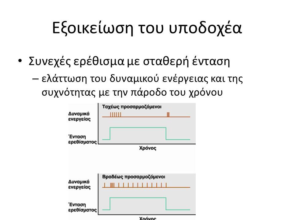Εξοικείωση του υποδοχέα Συνεχές ερέθισμα με σταθερή ένταση – ελάττωση του δυναμικού ενέργειας και της συχνότητας με την πάροδο του χρόνου