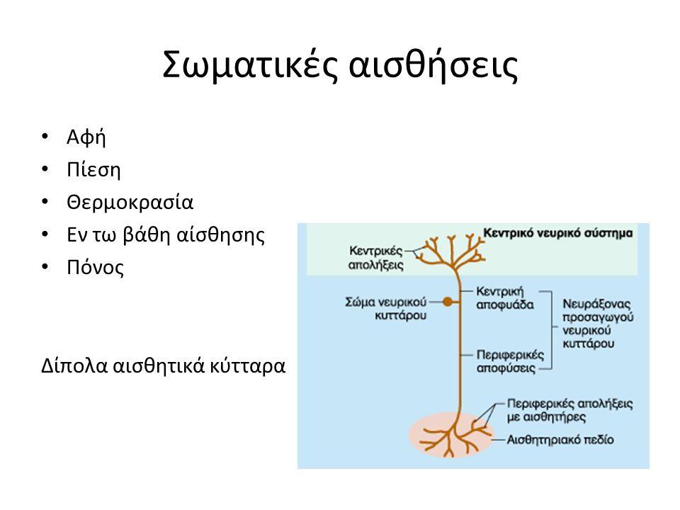 Σωματικές αισθήσεις Αφή Πίεση Θερμοκρασία Εν τω βάθη αίσθησης Πόνος Δίπολα αισθητικά κύτταρα