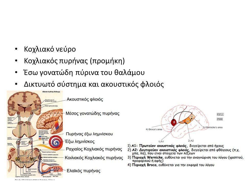 Κοχλιακό νεύρο Κοχλιακός πυρήνας (προμήκη) Έσω γονατώδη πύρινα του θαλάμου Δικτυωτό σύστημα και ακουστικός φλοιός