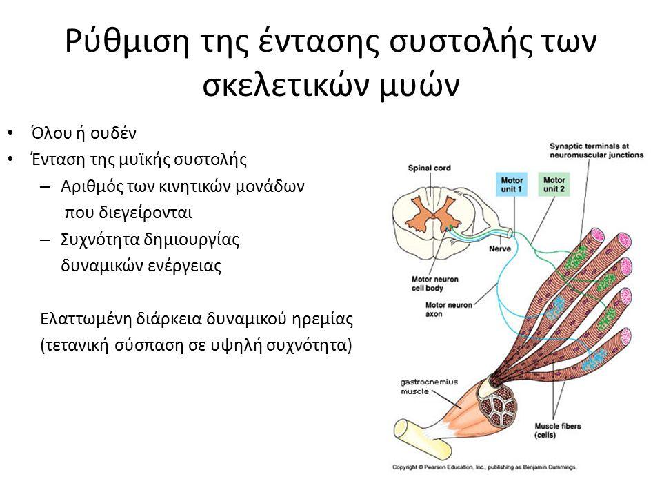 Ρύθμιση της έντασης συστολής των σκελετικών μυών Όλου ή ουδέν Ένταση της μυϊκής συστολής – Αριθμός των κινητικών μονάδων που διεγείρονται – Συχνότητα δημιουργίας δυναμικών ενέργειας Ελαττωμένη διάρκεια δυναμικού ηρεμίας (τετανική σύσπαση σε υψηλή συχνότητα)