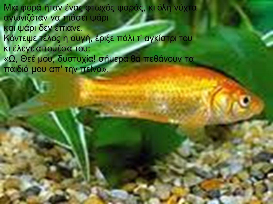 Του φάνηκε τότε πως τσίμπησε ψάρι και τράβηξε τ αγκίστρι.