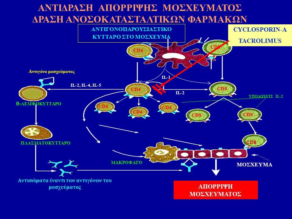 ΑΠΟΡΡΙΨΗ ΜΟΣΧΕΥΜΑΤΟΣ ΑΝΤΙΓΟΝΟΠΑΡΟΥΣΙΑΣΤΙΚΟ ΚΥΤΤΑΡΟ ΣΤΟ ΜΟΣΧΕΥΜΑ CD4 CD8 CD4 CD8 IL-2 Αντιγόνο μοσχεύματος Β- ΛΕΜΦΟΚΥΤΤΑΡΟ ΜΑΚΡΟΦΑΓΟ ΠΛΑΣΜΑΤΟΚΥΤΤΑΡΟ Αντισώματα έναντι των αντιγόνων του μοσχεύματος IL-2, IL-4, IL-5 ΥΠΟΔΟΧΕΙΣ IL-2 MOΣΧΕΥΜΑ ΙL-1 CYCLOSPORIN-A TACROLIMUS ΑΝΤΙΔΡΑΣΗ ΑΠΟΡΡΙΨΗΣ ΜΟΣΧΕΥΜΑΤΟΣ ΔΡΑΣΗ ΑΝΟΣΟΚΑΤΑΣΤΑΛΤΙΚΩΝ ΦΑΡΜΑΚΩΝ