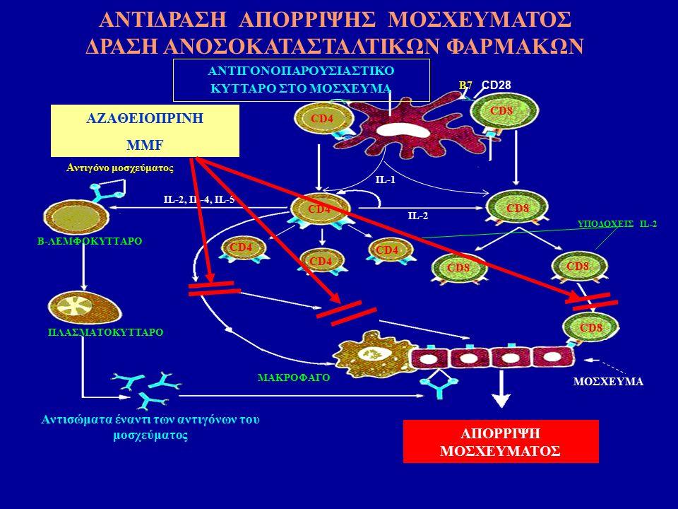 ΑΠΟΡΡΙΨΗ ΜΟΣΧΕΥΜΑΤΟΣ CD28 B7 ΑΝΤΙΓΟΝΟΠΑΡΟΥΣΙΑΣΤΙΚΟ ΚΥΤΤΑΡΟ ΣΤΟ ΜΟΣΧΕΥΜΑ CD4 CD8 CD4 CD8 IL-2 Αντιγόνο μοσχεύματος Β-ΛΕΜΦΟΚΥΤΤΑΡΟ ΜΑΚΡΟΦΑΓΟ ΠΛΑΣΜΑΤΟΚΥΤΤΑΡΟ Αντισώματα έναντι των αντιγόνων του μοσχεύματος IL-2, IL-4, IL-5 ΥΠΟΔΟΧΕΙΣ IL-2 MOΣΧΕΥΜΑ ΙL-1 AZAΘΕΙOΠΡΙΝΗ MMF ΑΝΤΙΔΡΑΣΗ ΑΠΟΡΡΙΨΗΣ ΜΟΣΧΕΥΜΑΤΟΣ ΔΡΑΣΗ ΑΝΟΣΟΚΑΤΑΣΤΑΛΤΙΚΩΝ ΦΑΡΜΑΚΩΝ