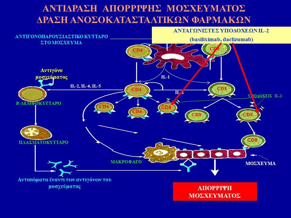 ΑΠΟΡΡΙΨΗ ΜΟΣΧΕΥΜΑΤΟΣ CD28 B7ΑΝΤΙΓΟΝΟΠΑΡΟΥΣΙΑΣΤΙΚΟ ΚΥΤΤΑΡΟ ΣΤΟ ΜΟΣΧΕΥΜΑ CD4 CD8 CD4 CD8 IL-2 Αντιγόνο μοσχεύματος Β-ΛΕΜΦΟΚΥΤΤΑΡΟ ΜΑΚΡΟΦΑΓΟ ΠΛΑΣΜΑΤΟΚΥΤΤΑΡΟ Αντισώματα έναντι των αντιγόνων του μοσχεύματος IL-2, IL-4, IL-5 ΥΠΟΔΟΧΕΙΣ IL-2 MOΣΧΕΥΜΑ ΙL-1 ΑΝΤΑΓΩΝΙΣΤΕΣ ΥΠΟΔΟΧΕΩΝ IL-2 (basiliximab, daclizumab) ΑΝΤΙΔΡΑΣΗ ΑΠΟΡΡΙΨΗΣ ΜΟΣΧΕΥΜΑΤΟΣ ΔΡΑΣΗ ΑΝΟΣΟΚΑΤΑΣΤΑΛΤΙΚΩΝ ΦΑΡΜΑΚΩΝ