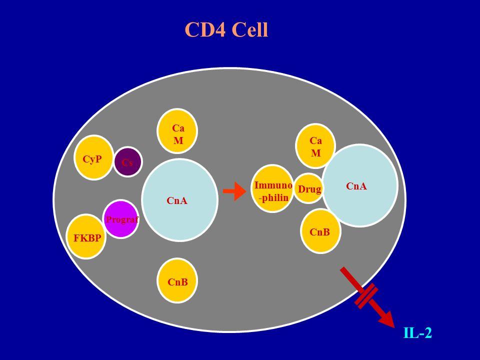 Immuno -philin Ca M CyP FKBP CnA CnB Drug Ca M CnA CnB Cs Prograf IL-2 CD4 Cell
