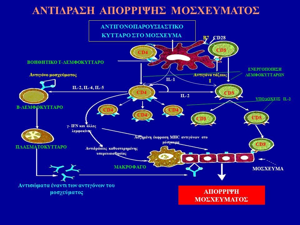 Chapman JR et al J Am Soc Nephrol 2005 GFR πιο ευαίσθητος και πρώιμος δείκτης έκπτωσης της νεφρικής λειτουργίας από την κρεατινίνη ορού