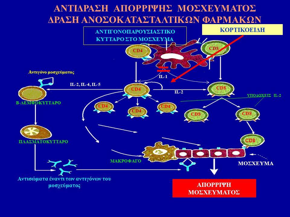 ΑΠΟΡΡΙΨΗ ΜΟΣΧΕΥΜΑΤΟΣ ΑΝΤΙΓΟΝΟΠΑΡΟΥΣΙΑΣΤΙΚΟ ΚΥΤΤΑΡΟ ΣΤΟ ΜΟΣΧΕΥΜΑ CD4 CD8 CD4 CD8 IL-2 Αντιγόνο μοσχεύματος Β-ΛΕΜΦΟΚΥΤΤΑΡΟ ΜΑΚΡΟΦΑΓΟ ΠΛΑΣΜΑΤΟΚΥΤΤΑΡΟ Αντισώματα έναντι των αντιγόνων του μοσχεύματος IL-2, IL-4, IL-5 ΥΠΟΔΟΧΕΙΣ IL-2 MOΣΧΕΥΜΑ ΙL-1 KOΡΤΙΚΟΕΙΔΗ ΑΝΤΙΔΡΑΣΗ ΑΠΟΡΡΙΨΗΣ ΜΟΣΧΕΥΜΑΤΟΣ ΔΡΑΣΗ ΑΝΟΣΟΚΑΤΑΣΤΑΛΤΙΚΩΝ ΦΑΡΜΑΚΩΝ