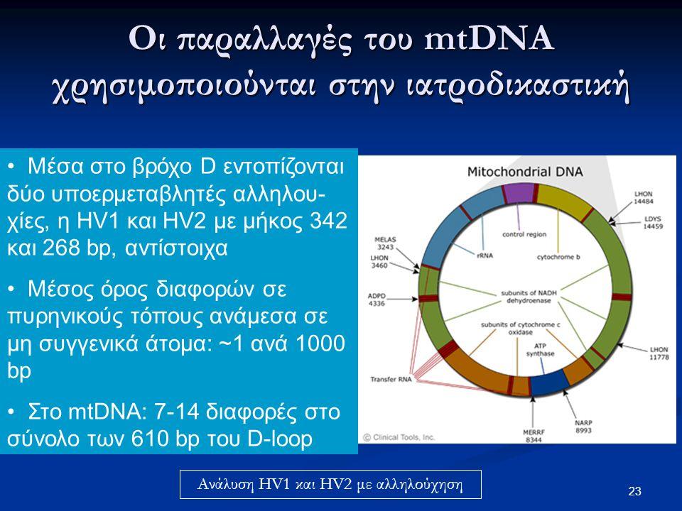 23 Μέσα στο βρόχο D εντοπίζονται δύο υποερμεταβλητές αλληλου- χίες, η HV1 και HV2 με μήκος 342 και 268 bp, αντίστοιχα Μέσος όρος διαφορών σε πυρηνικούς τόπους ανάμεσα σε μη συγγενικά άτομα: ~1 ανά 1000 bp Στο mtDNA: 7-14 διαφορές στο σύνολο των 610 bp του D-loop Οι παραλλαγές του mtDNA χρησιμοποιούνται στην ιατροδικαστική Ανάλυση HV1 και HV2 με αλληλούχηση