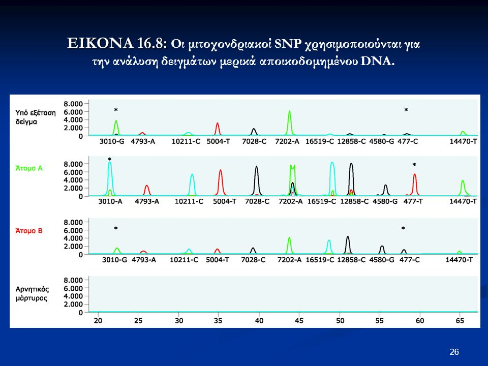 26 ΕΙΚΟΝΑ 16.8: ΕΙΚΟΝΑ 16.8: Οι μιτοχονδριακοί SNP χρησιμοποιούνται για την ανάλυση δειγμάτων μερικά αποικοδομημένου DNA.