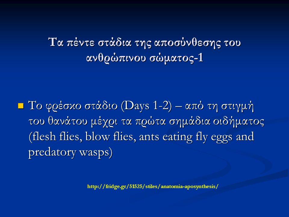 Τα πέντε στάδια της αποσύνθεσης του ανθρώπινου σώματος-1 Το φρέσκο στάδιο (Days 1-2) – από τη στιγμή του θανάτου μέχρι τα πρώτα σημάδια οιδήματος (flesh flies, blow flies, ants eating fly eggs and predatory wasps) Το φρέσκο στάδιο (Days 1-2) – από τη στιγμή του θανάτου μέχρι τα πρώτα σημάδια οιδήματος (flesh flies, blow flies, ants eating fly eggs and predatory wasps) http://fridge.gr/51525/stiles/anatomia-aposynthesis/