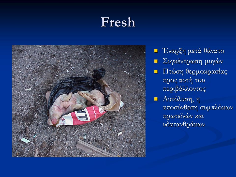 Fresh Έναρξη μετά θάνατο Έναρξη μετά θάνατο Συγκέντρωση μυγών Συγκέντρωση μυγών Πτώση θερμοκρασίας προς αυτή του περιβάλλοντος Πτώση θερμοκρασίας προς αυτή του περιβάλλοντος Αυτόλυση, η αποσύνθεση συμπλόκων πρωτεϊνών και υδατανθράκων Αυτόλυση, η αποσύνθεση συμπλόκων πρωτεϊνών και υδατανθράκων