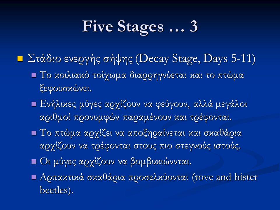 Five Stages … 3 Στάδιο ενεργής σήψης (Decay Stage, Days 5-11) Στάδιο ενεργής σήψης (Decay Stage, Days 5-11) Το κοιλιακό τοίχωμα διαρρηγνύεται και το πτώμα ξεφουσκώνει.