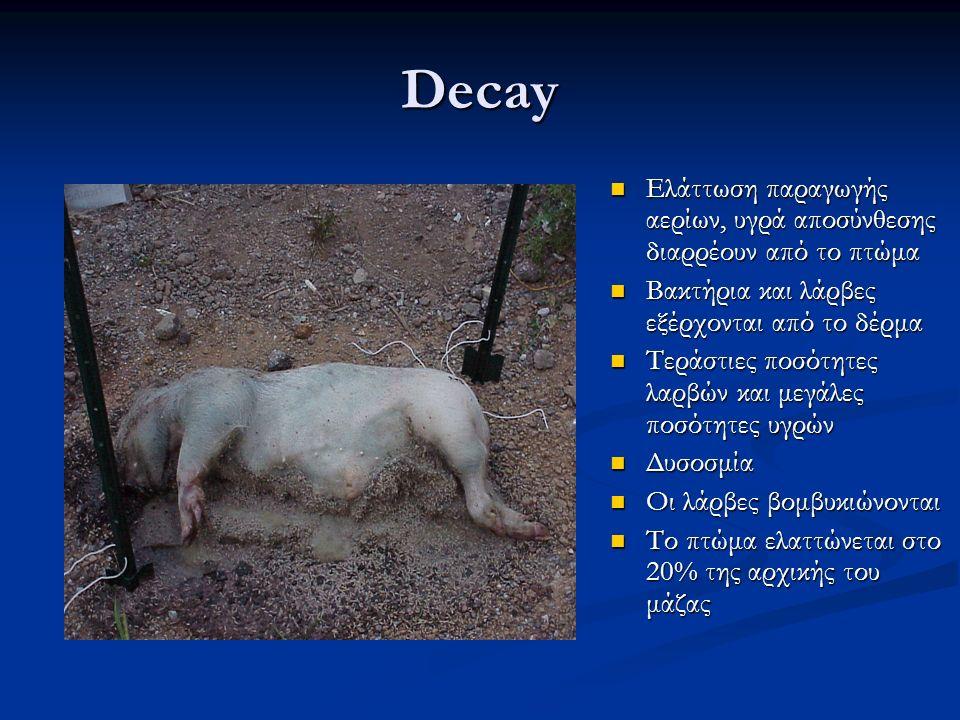 Decay Ελάττωση παραγωγής αερίων, υγρά αποσύνθεσης διαρρέουν από το πτώμα Ελάττωση παραγωγής αερίων, υγρά αποσύνθεσης διαρρέουν από το πτώμα Βακτήρια κ