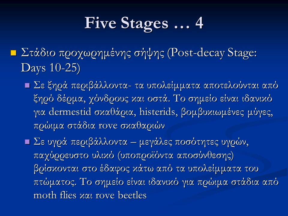 Five Stages … 4 Στάδιο προχωρημένης σήψης (Post-decay Stage: Days 10-25) Στάδιο προχωρημένης σήψης (Post-decay Stage: Days 10-25) Σε ξηρά περιβάλλοντα